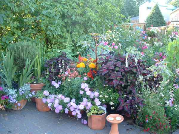 Thursday, July 17th The 46th Parallel Gardening Club Is Presenting Another  Summer Garden Tour. This Year 4 Ironwood Gardens And 1 Hurley Garden Will  Be ...